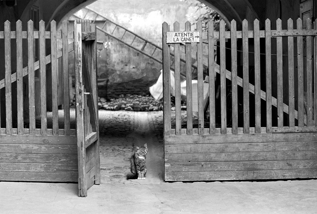 Katze im Tor, 2002 © Loredana Nemes