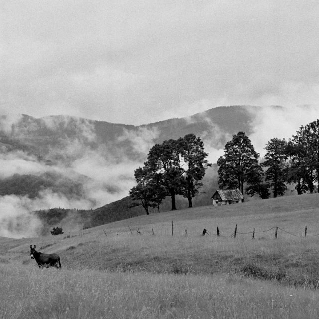 Landschaft mit Esel, 2009, © Loredana Nemes