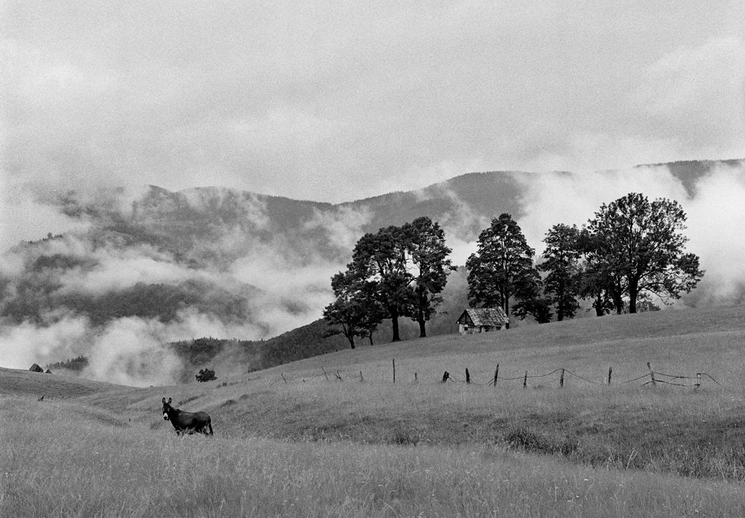 Landscape with Donkey, 2009 © Loredana Nemes