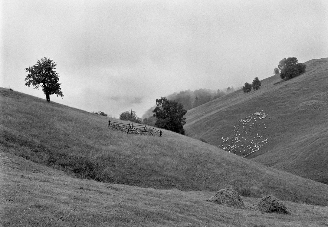Landschaft mit Schafen, 2009 © Loredana Nemes