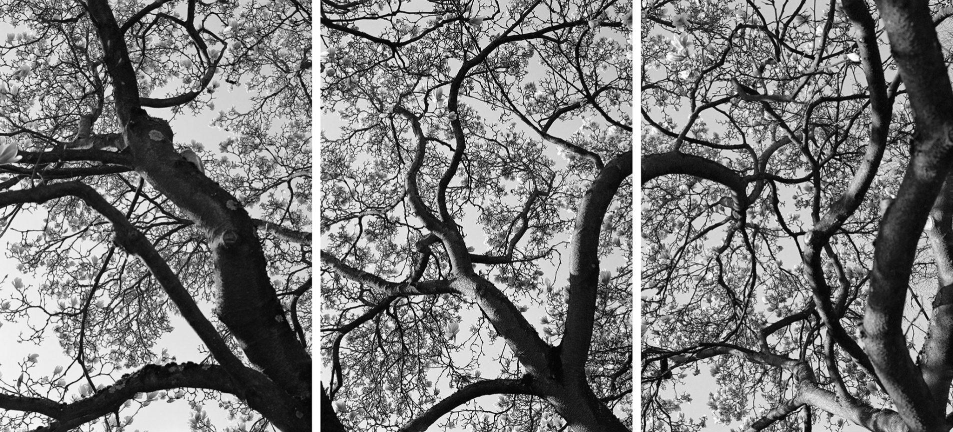 Magnolienblüte, 2012 © Loredana Nemes