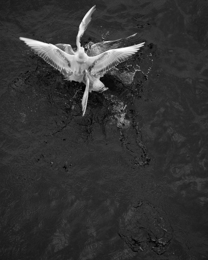 Greed #02, 2014 © Loredana Nemes