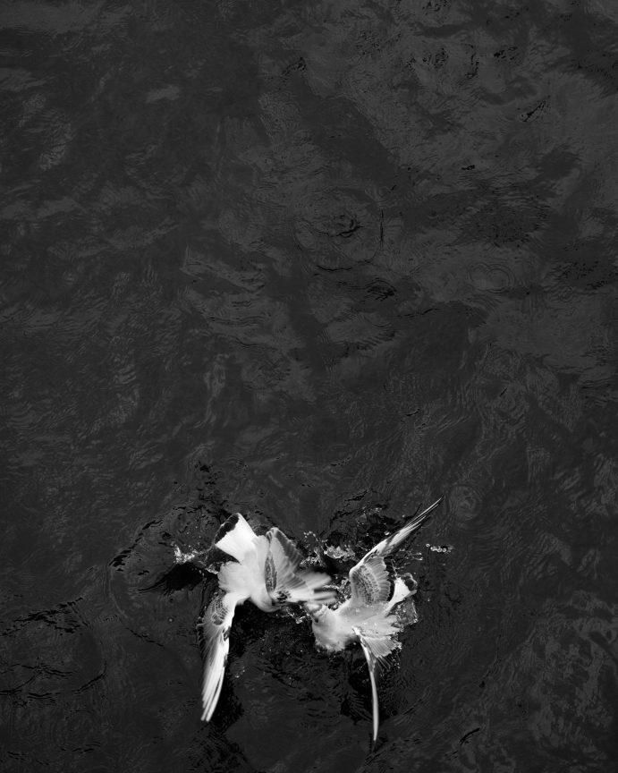 Greed #03, 2014 © Loredana Nemes