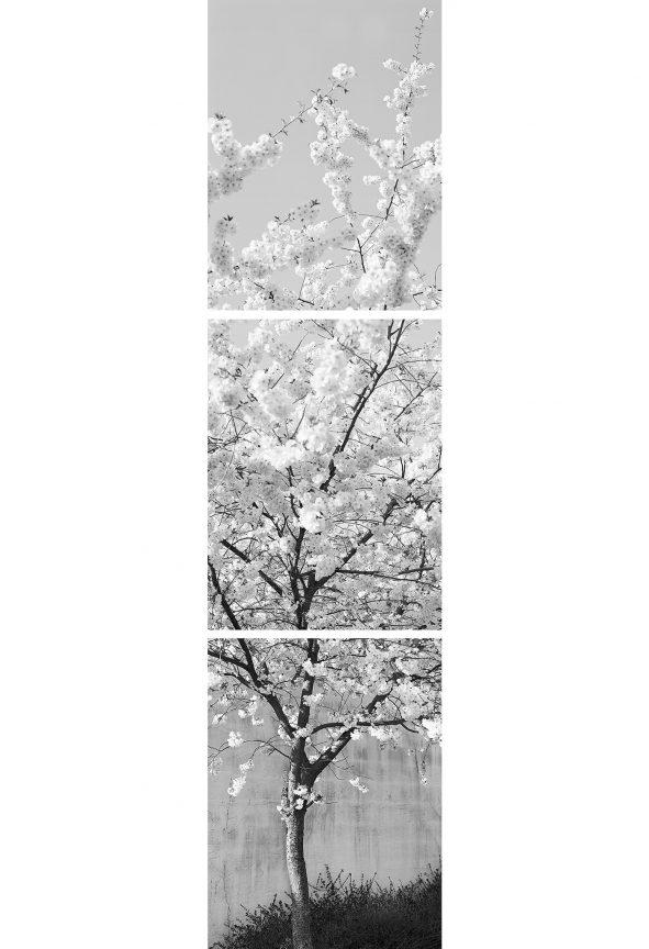 Kirschblüten, 2012 © Loredana Nemes