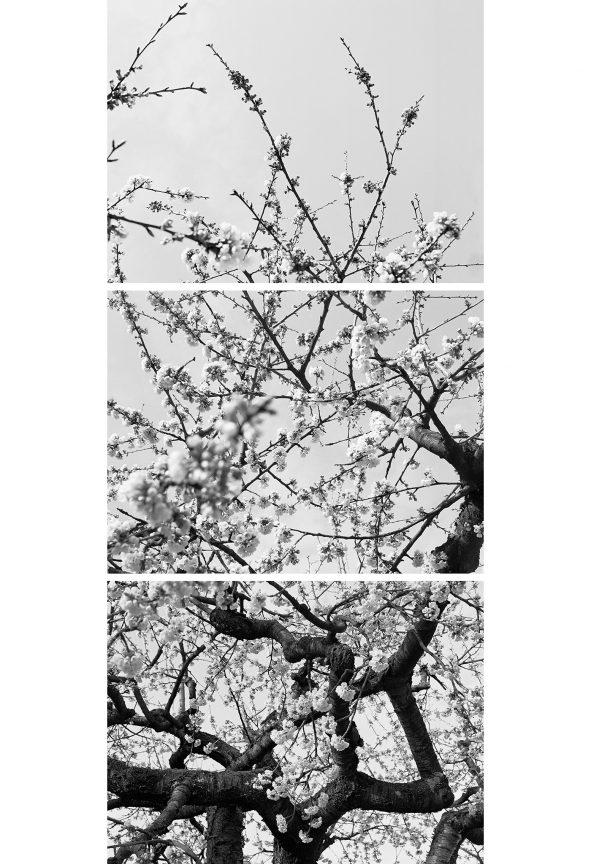 Blüten 03, 2012 © Loredana Nemes